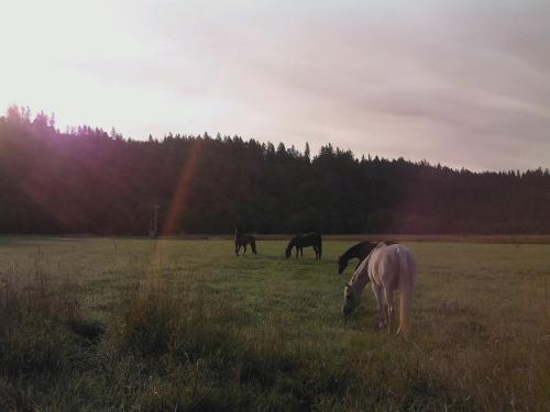 Horses Big Pasture