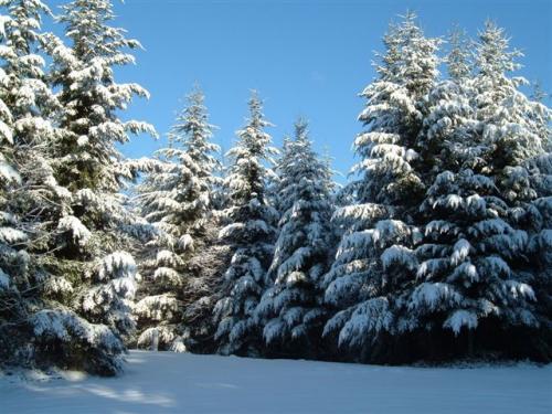 November 2010 Snow 010